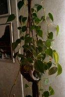 philo-plant